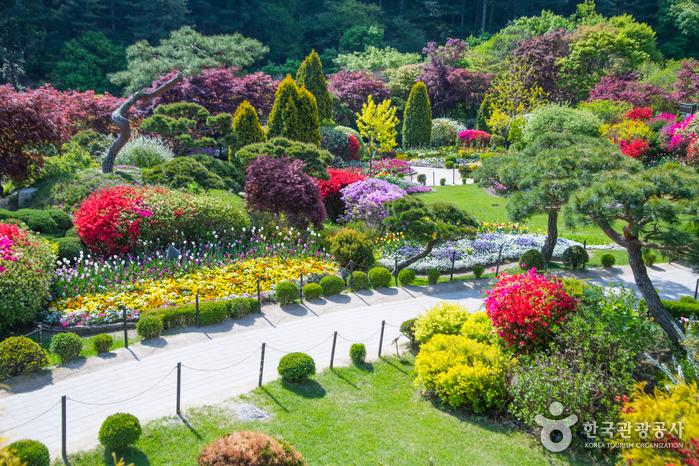 Сад утреннего спокойствия (아침고요수목원)8