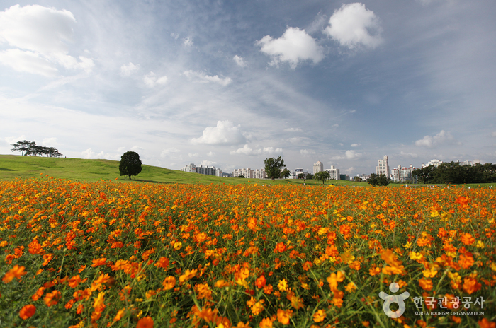Олимпийский парк (올림픽공원)