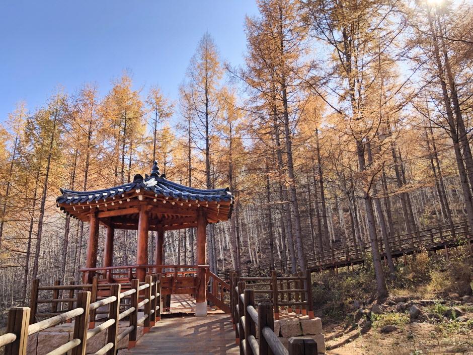 국립김천치유의숲