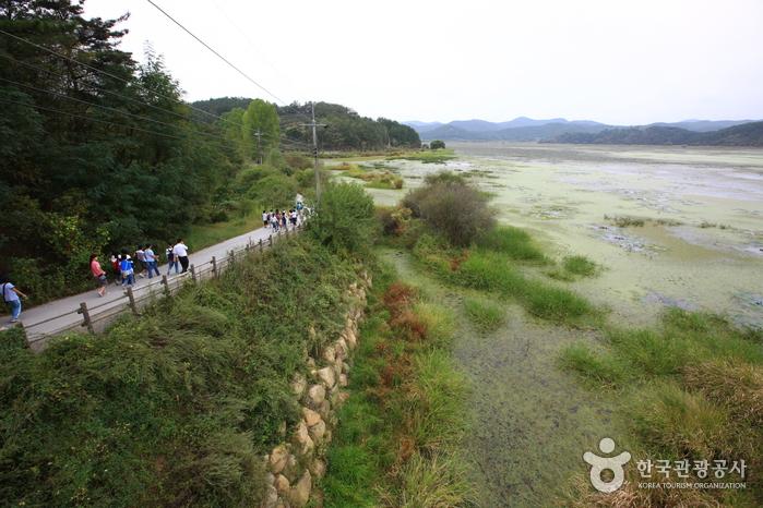 Changnyeong Upo Wetland (창녕 우포늪)