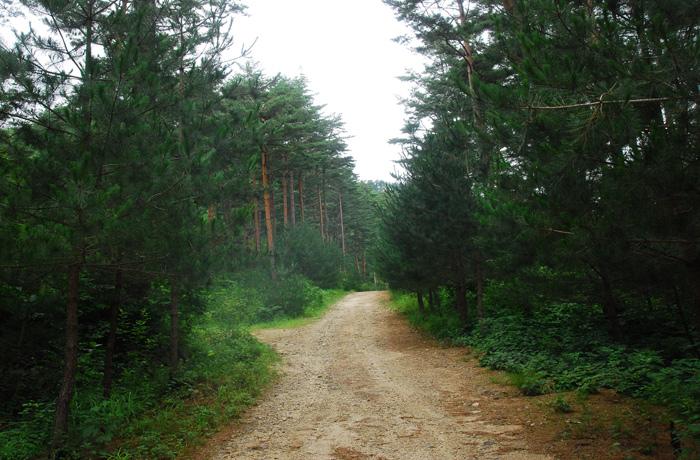 Geumgang Kiefernweg Uljin (울진 금강소나무 숲길)