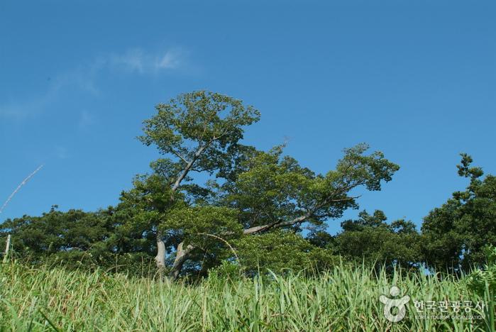 영광 법성진 숲쟁이