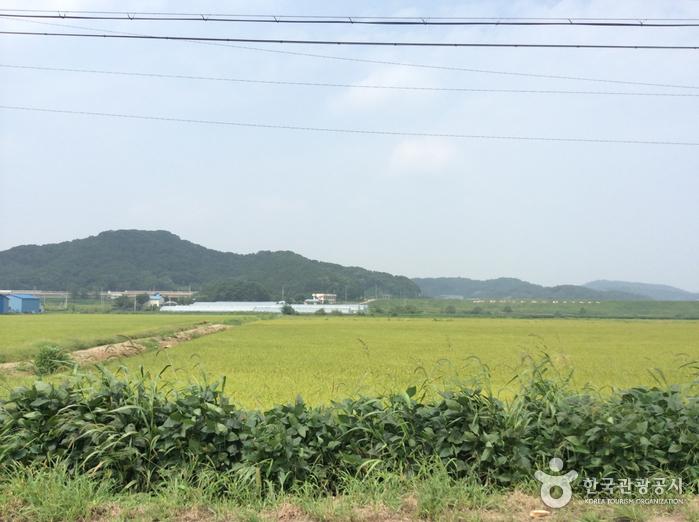 Hábitat de Aves Migratorias de Cheorwon (철원 철새도래지)