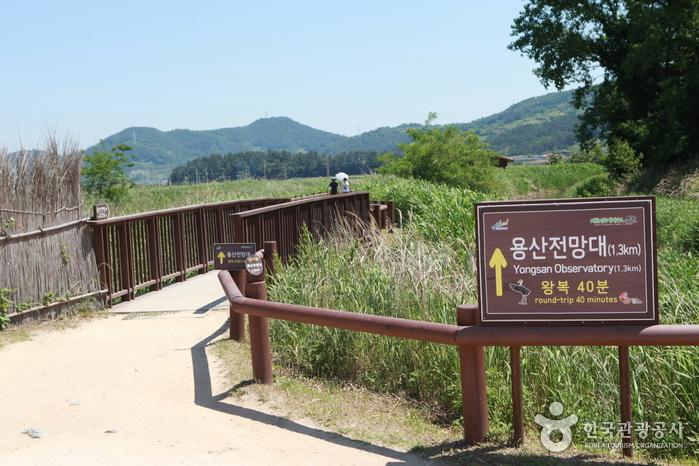 Обзорная площадка Ёнсан у залива Сунчхонман (순천만 용산전망대(S자 물길))3