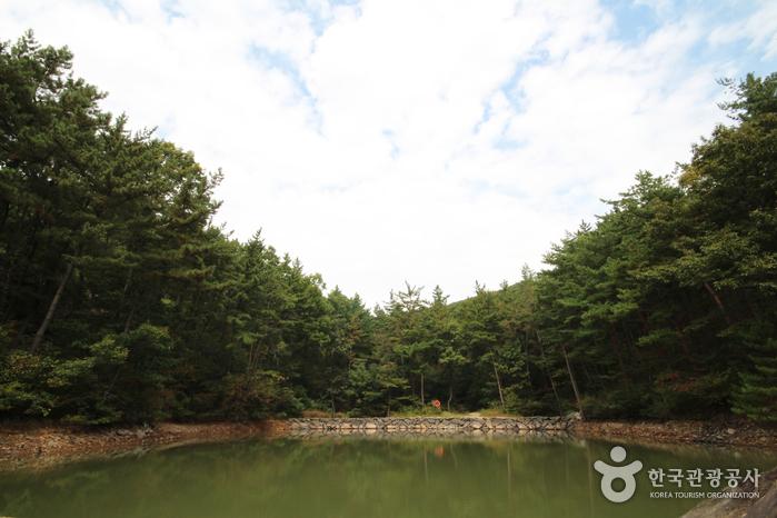 국립 희리산해송자연휴양림