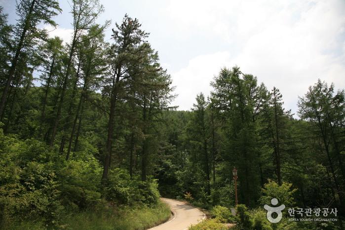 Songnisan Maltijae Recreational Forest (국립 속리산말티재자연휴양림)