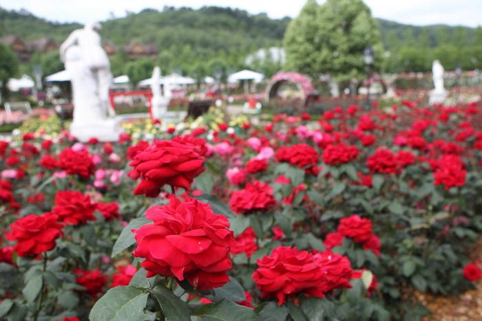 愛寶樂園玫瑰節(에버랜드 장미 축제)