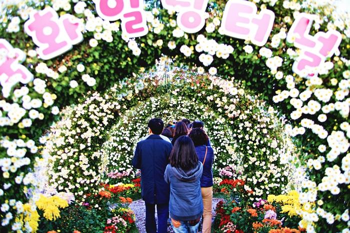 Festival Gagopa des chrysanthèmes à Masan (마산 가고파국화축제)