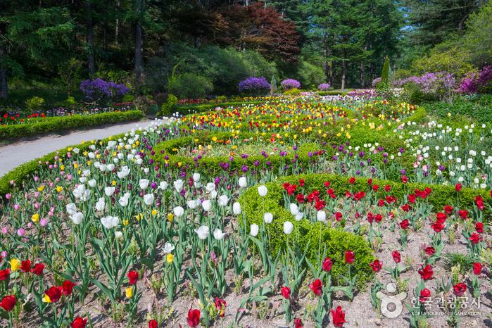 Сад утреннего спокойствия (아침고요수목원)9
