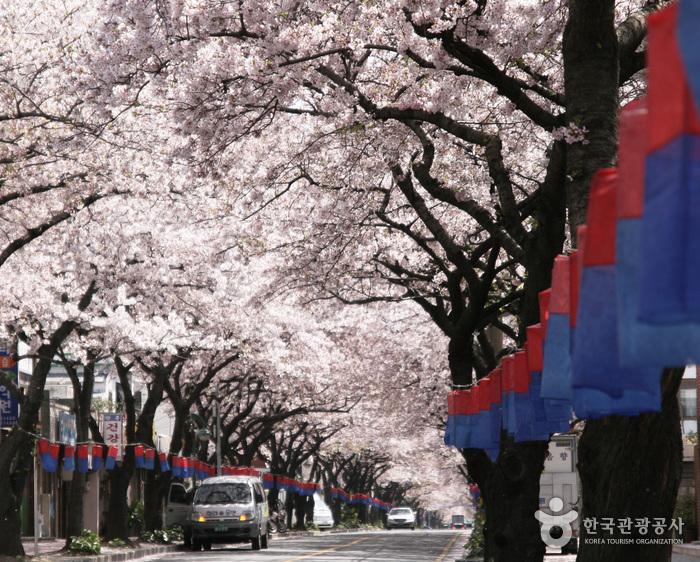 済州ソサラ文化通り祭り(제주 서사라문화거리축제)