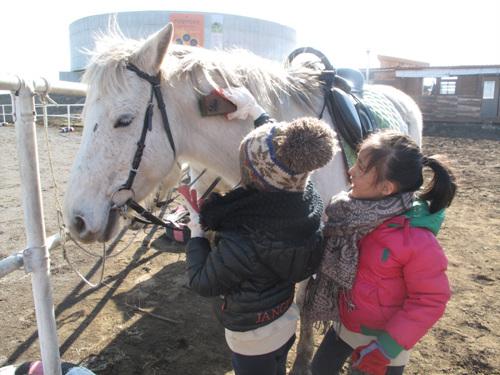 Jeju Horse Park (조랑말체험공원)