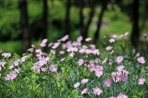남해 꽃밭축제 2019