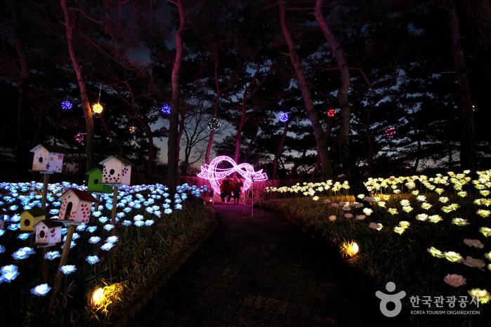 이월드 별빛축제 사진6