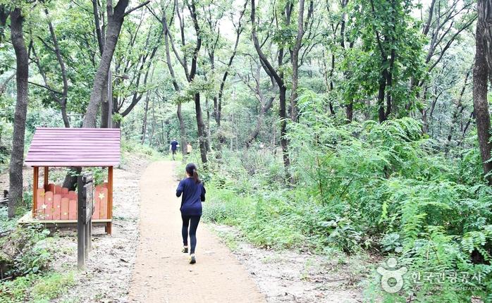 숲길 사이로 뛰어가는 참자가들의 뒷모습