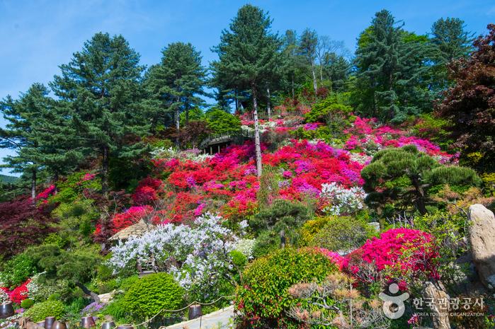 Сад утреннего спокойствия (아침고요수목원)10
