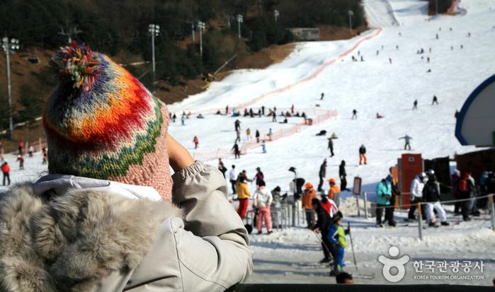阳智松林度假村滑雪场(양지파인리조트 스키장)