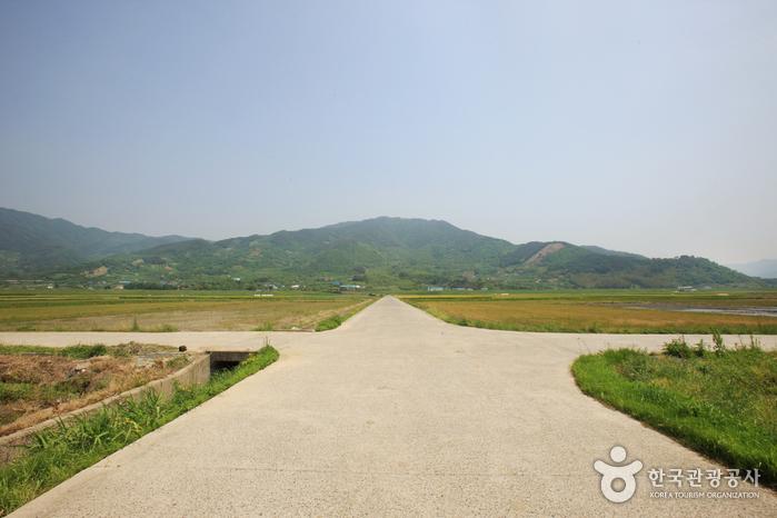 Pyeongsari Field (평사리들판)