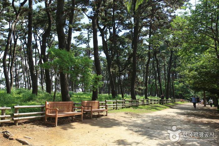Парк Тэванам (대왕암공원)12
