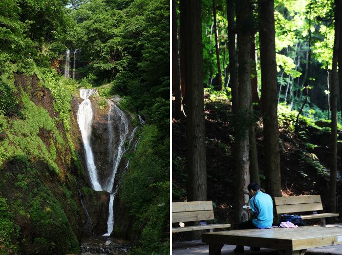 봉래폭포와 삼나무 삼림욕장