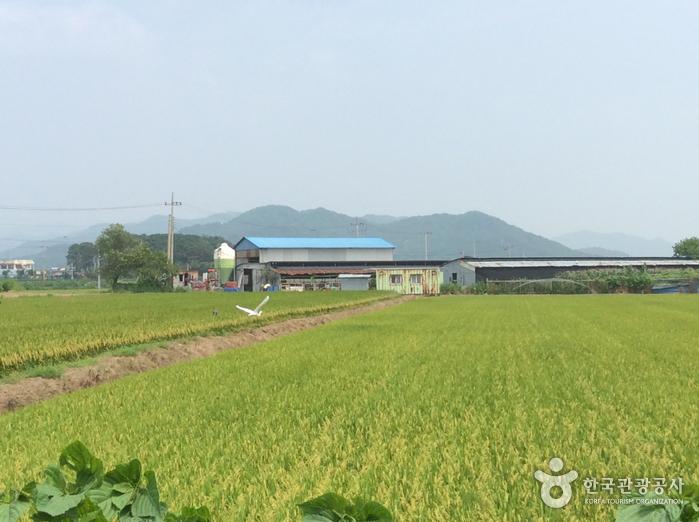 Cheorwon Plain (Migratory Bird Habitat) (철원평야(철새도래지))