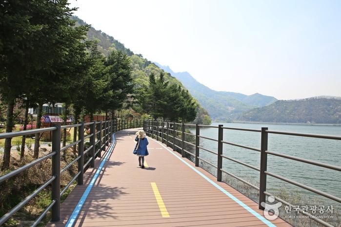 찬란한 춘천의 봄을 알차게 즐기는 방법! 낮에는 스카이워크, 밤에는 호수별빛나라 축제