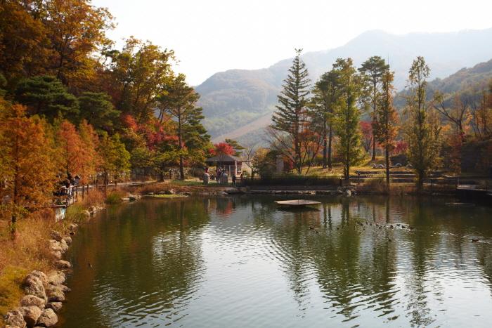 Hwadam Botanic Garden (화담숲)
