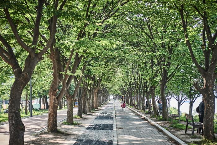 Парк Кончжичхон (공지천(황금비늘테마거리))9
