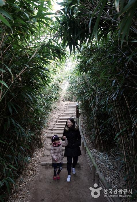 엄마와 아이가 숲길을 걷고 있다.
