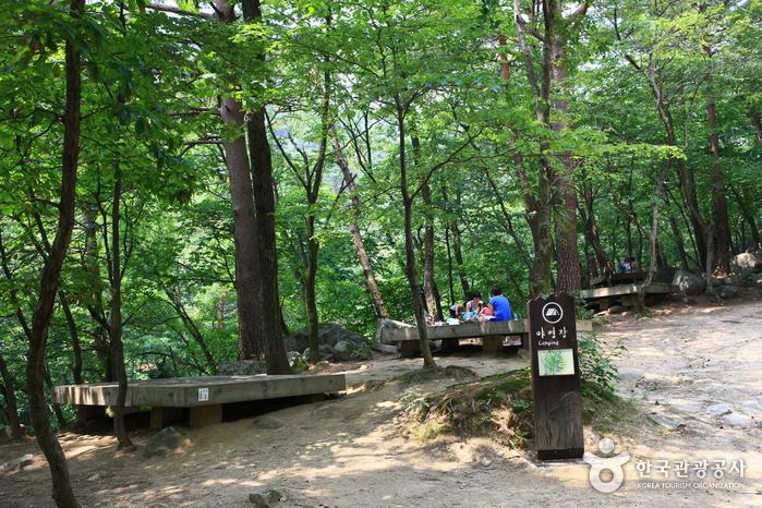 자연친화적인 제1야영장. 숲 속의 야영장에서 마시는 공기는 맑고 시원하여 긴장했던 몸과 마음을 노곤하게 해준다.