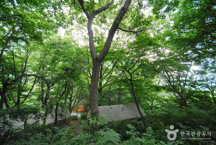 간월산 자연휴양림
