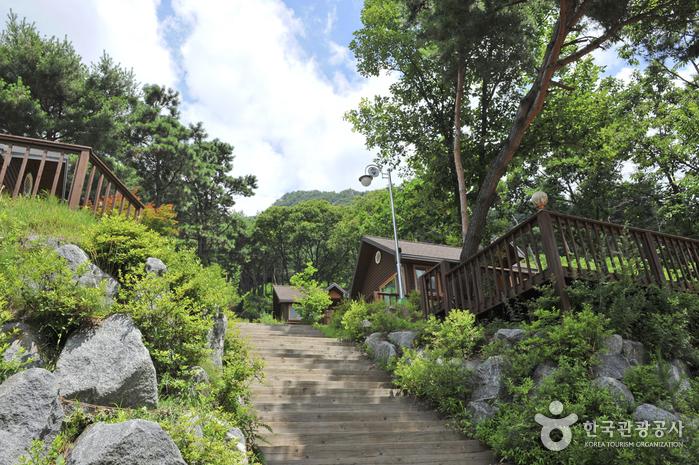 Forêt Récréative et Culturelle de Yongmun-san (용문산자연휴양림)