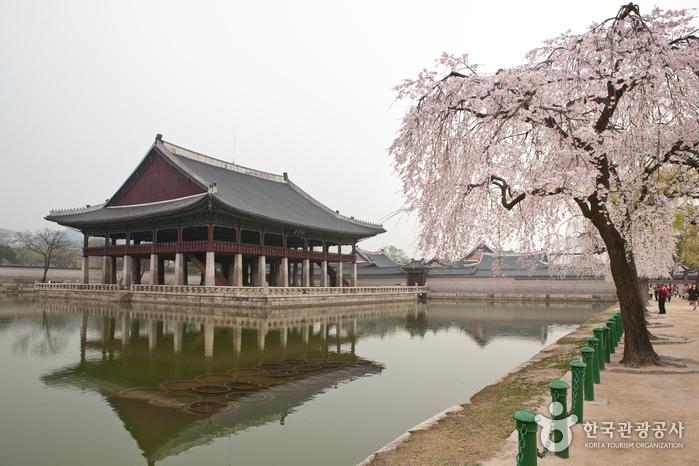 봄날의 꽃대궐에 가다 '창덕궁, 경복궁, 덕수궁의 숨은 봄꽃'