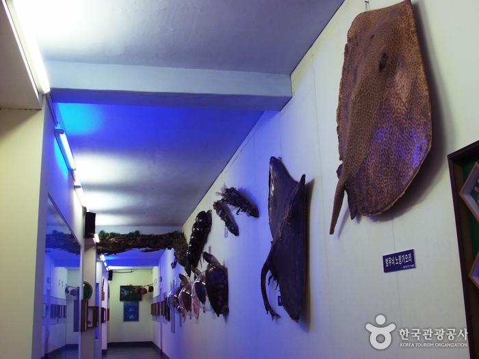 Ttangkkut Marine Natural History Museum (땅끝해양자연사박물관)