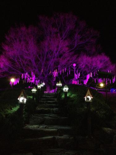 현풍 500년 느티나무 테마공원