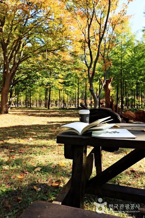 단풍 아래 책을 펼치게 하는 남이섬의 가을