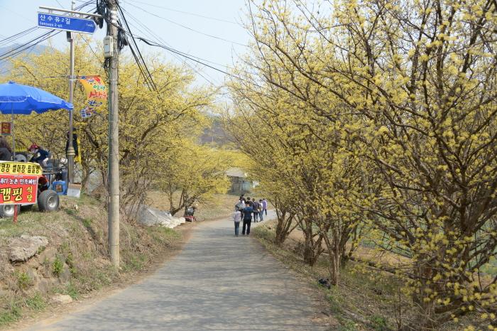 楊平 山茱萸韓牛祭り(양평 산수유한우축제)