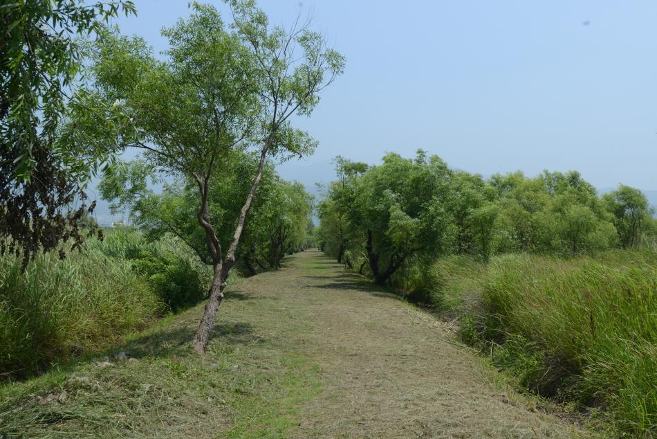 숲 이의 산책길