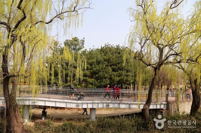 선유도 공원의 버드나무