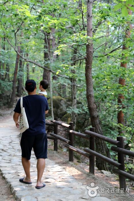 무릉계곡 숲길
