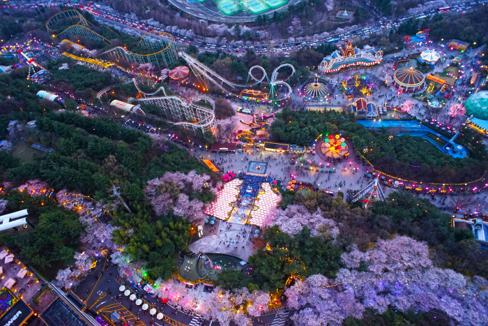 Вишневый фестиваль света в парке E-World в Тэгу (이월드 별빛벚꽃축제 2019)