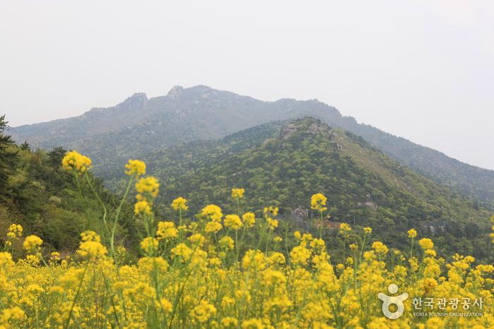 금산(남해) 사진4