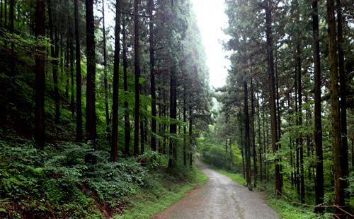 진한 숲 내음 가득 '축령산 편백나무 숲' 사진
