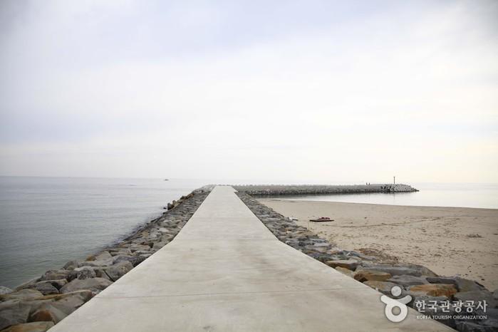 봉평해수욕장 (바다낚시)