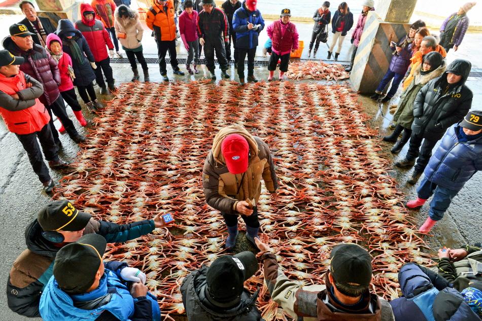 蔚珍竹蟹及紅蟹節(울진대게와 붉은대게축제)7