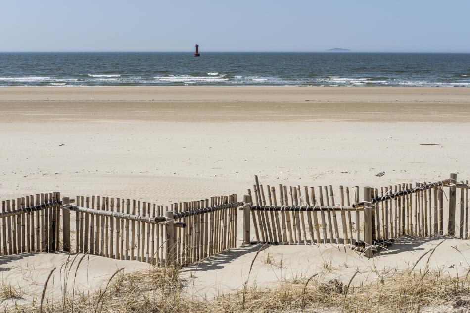 대나무 말뚝을 촘촘히 박아 설치한 모래 포집기는 해안사구가 쓸려 내려가는 걸 방지한다.