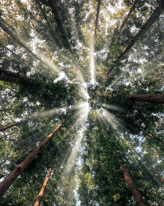 Jangtaesan Recreational Forest (장태산자연휴양림)