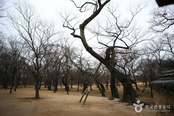Gyerim Forest (계림)