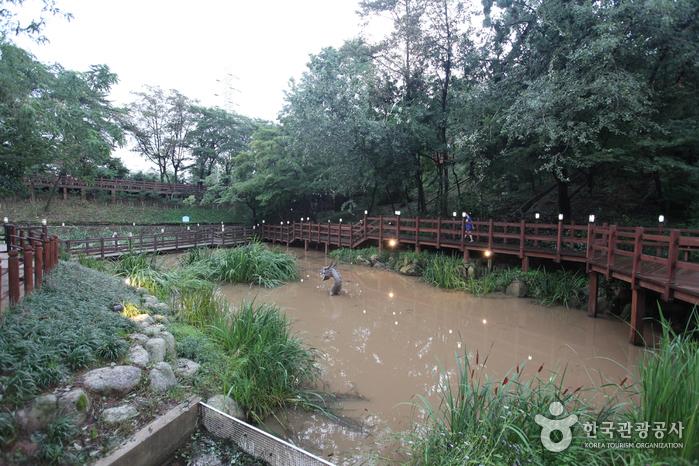 Экологический парк в горах Ачхасан (아차산생태공원)12