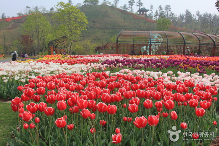 International Garden Exposition Suncheon Bay Korea 2013 (순천만국제정원박람회)