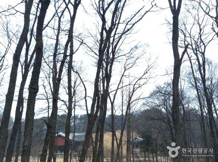 서울 헌릉과 인릉 [유네스코 세계문화유산]